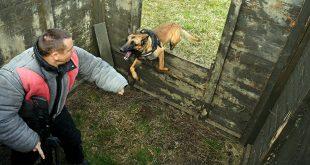 Vojno policijski  psi – važna karika u uspješnom obavljanju zadaća